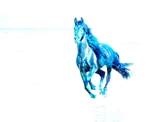 Running blue horse 1