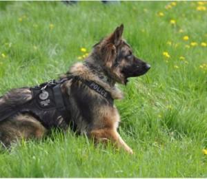 police_dog.jpg.size.xxlarge.letterbox