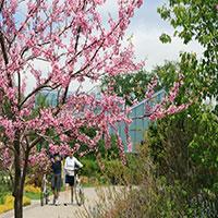 Toronto-Botanical-Garden_Janet-Davis_200x200