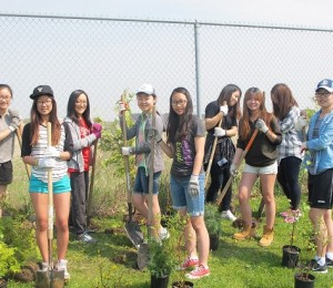 gyl-tree-planting-2015-3