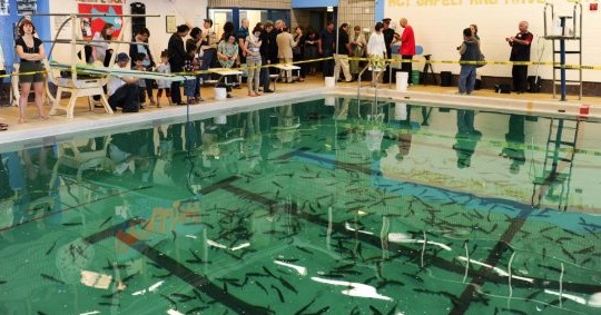 Scadding Court Community Centre's Gone Fishin'