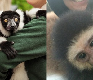 Elmvale Jungle Zoo monkey